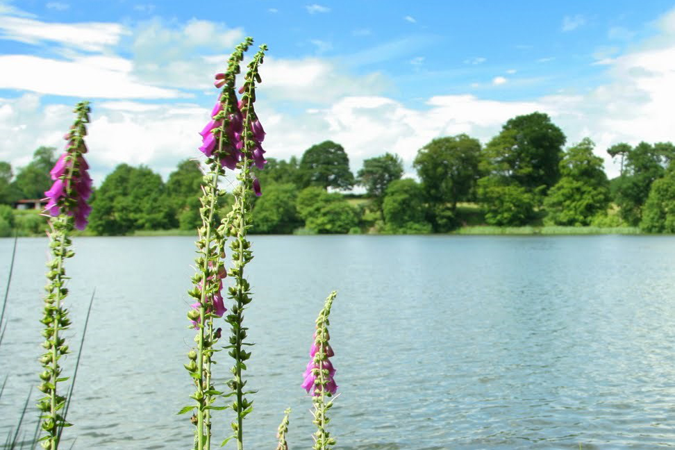 Colemere Water