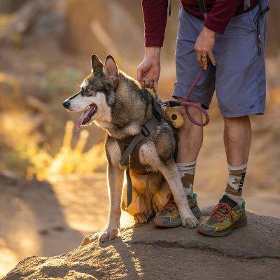 Take your furry companion with you on epic hikes