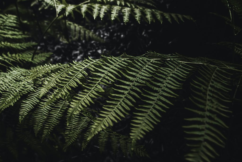 Plant life and bushes in the woods