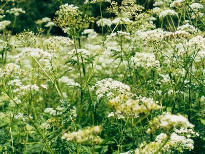 Top edible plants you can find foraging