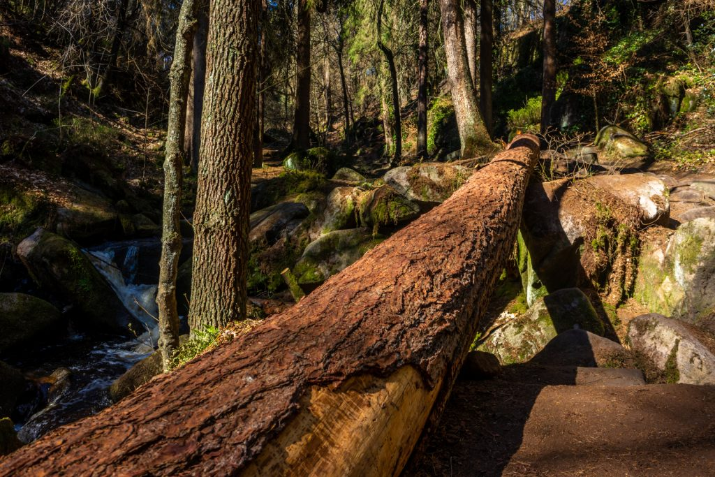 A fallen tree at Wyming Brook Nature Reserve