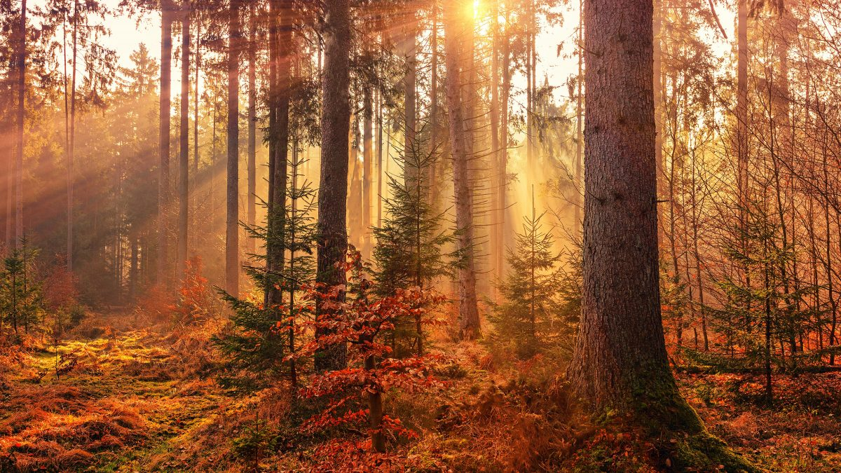 Best Woodlands in the UK for Autumn